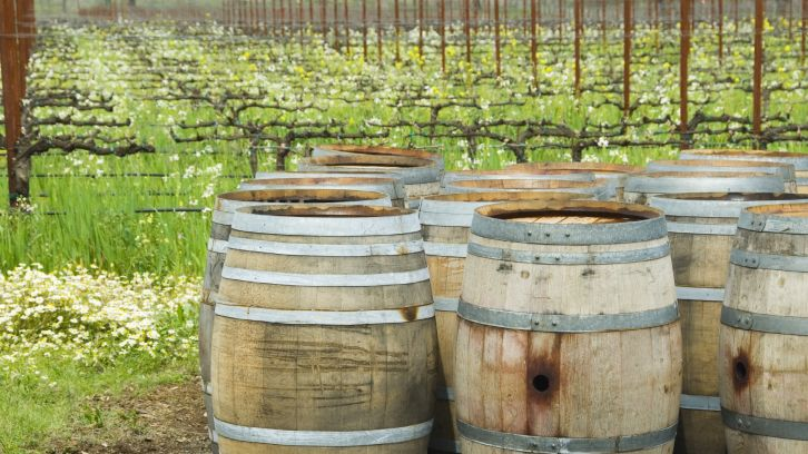wine barrels in front of vineyard
